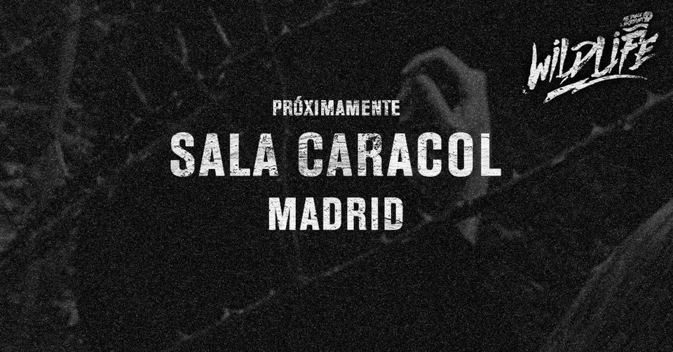 WILDLIFE MADRID SALA CARACOL  - Club WILDLIFE